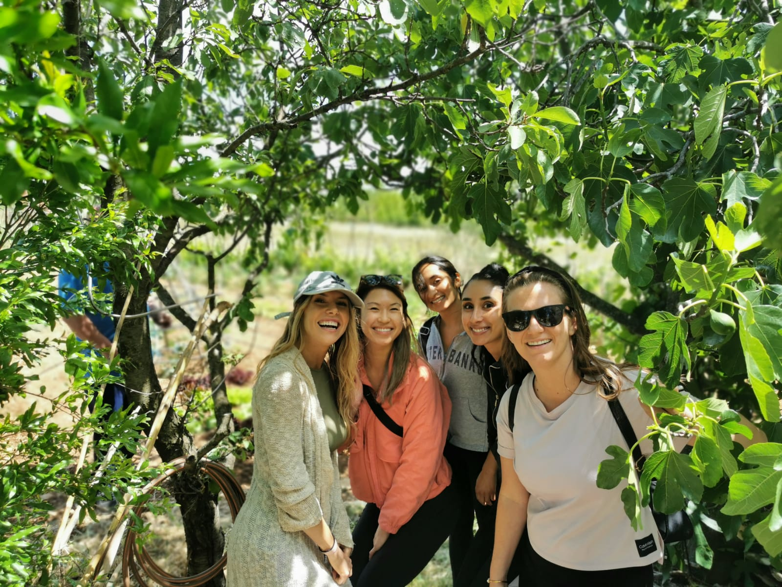 Krka tour from Split all you need to know